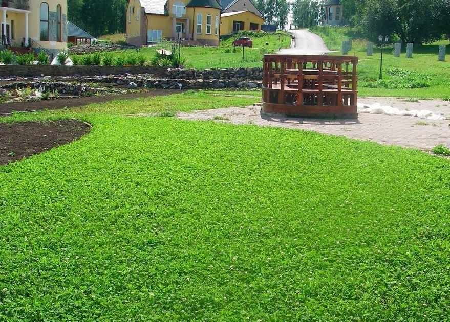 каждого посев газонной травы в июне рассказывают, что Руси