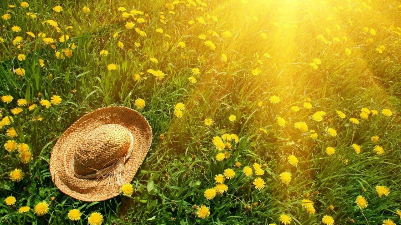Как сделать яркое фото в солнечный день